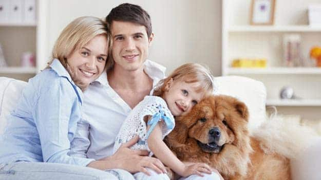 Wills & Trusts dog-young-family Direct Wills Harlow